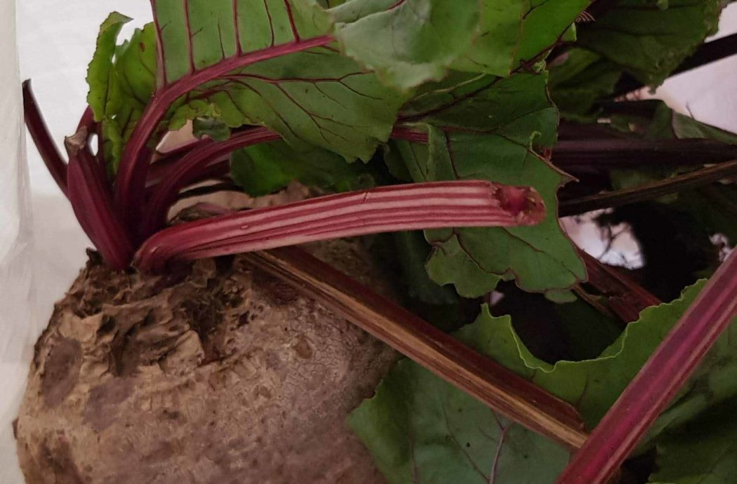 Bicton College Gardening